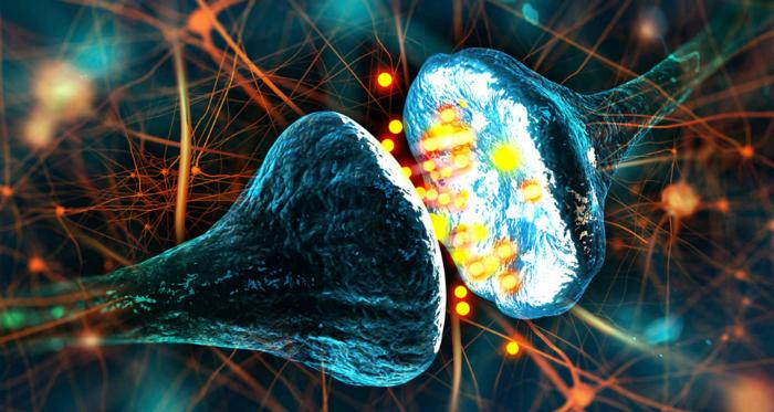 ¿Qué pasa cuando mueren tus neuronas? 0