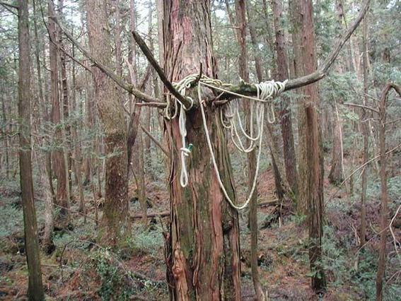 bosque de los suicidos