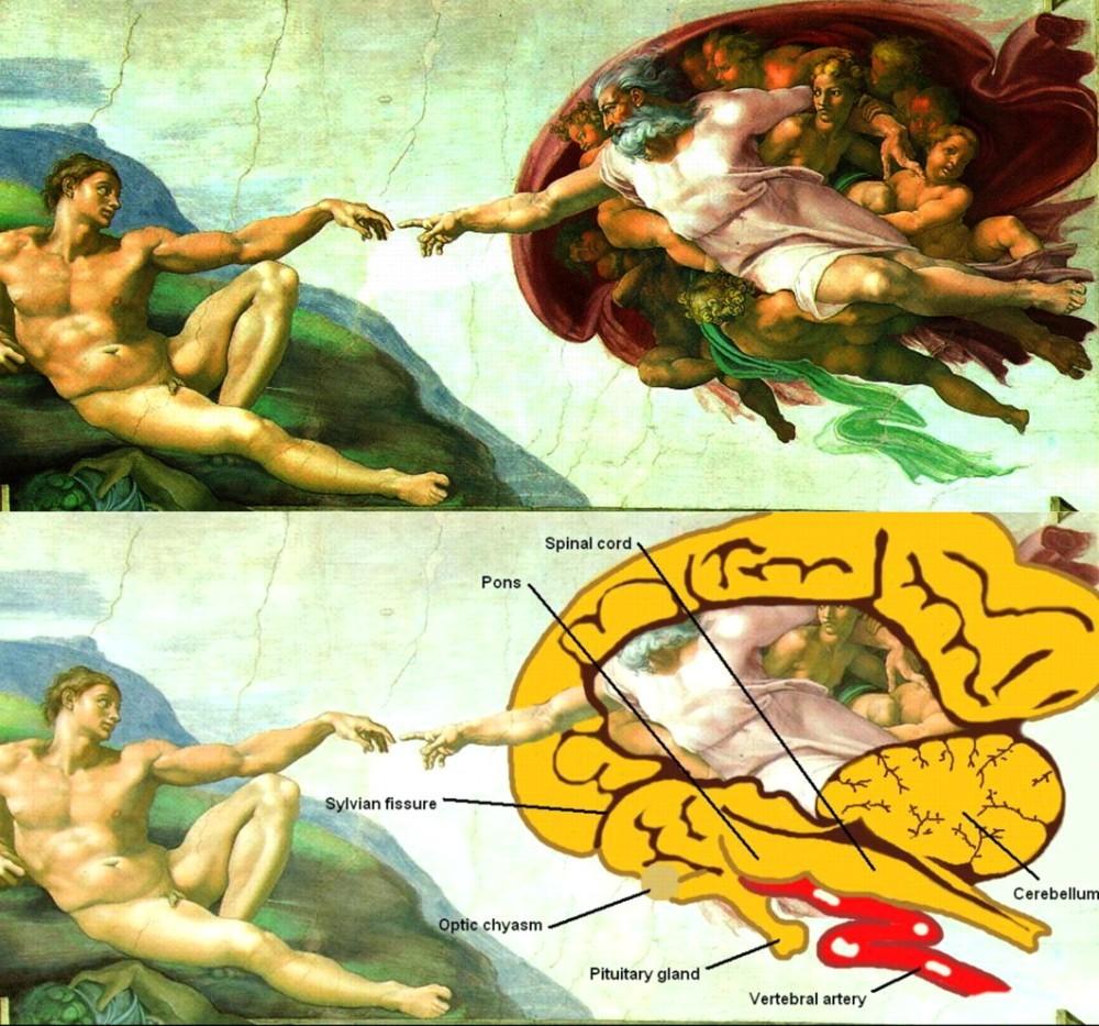 La anatomía oculta en las obras de Miguel Ángel - Arte