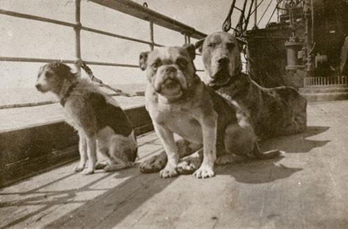 titanic_dogs_on_titanic