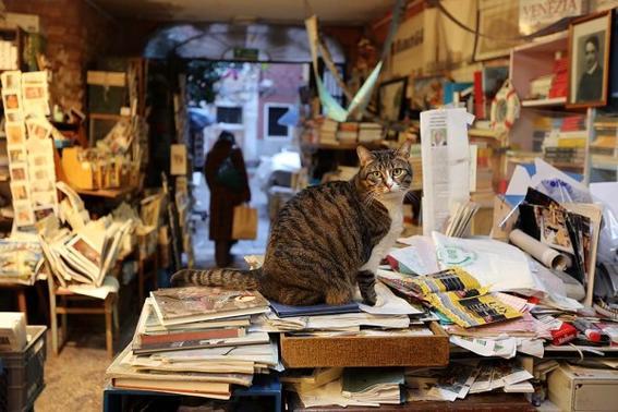 Libreria-Acqua-Alta-bookstore-venice-italy-4-600x400