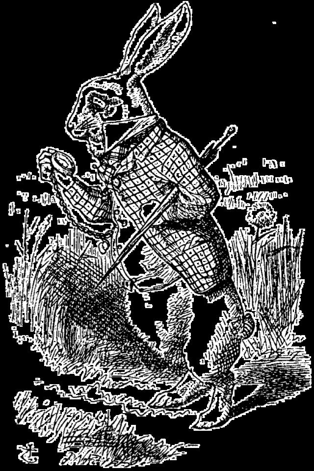 La representación simbólica del conejo - Historia - Historia