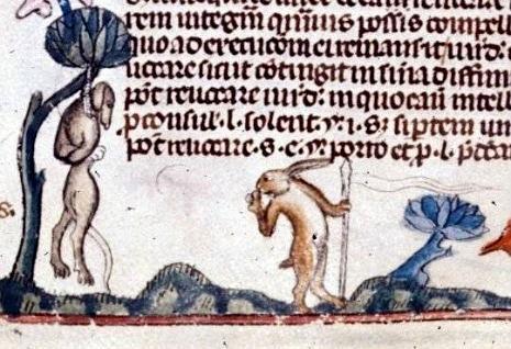 representacion del conejo 6
