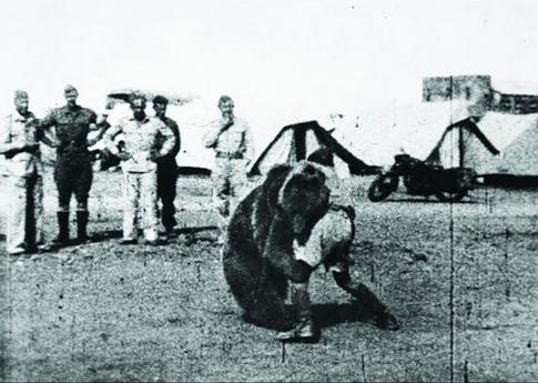 oso13