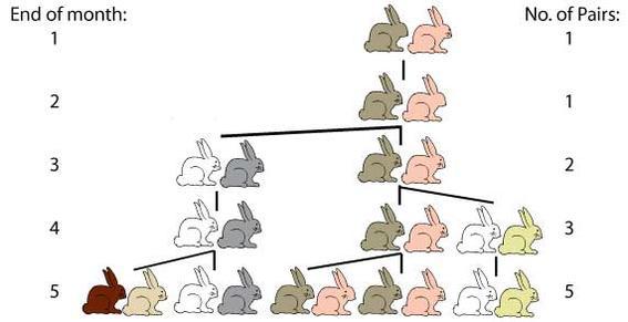 fibonacci-rabbits