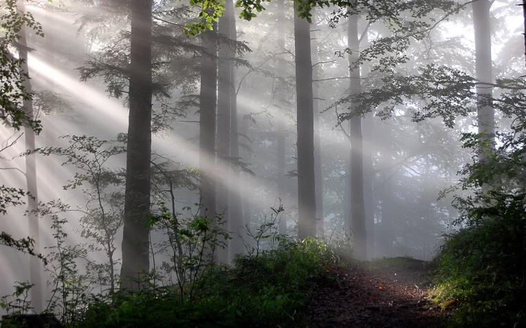 Bosques lugares para probar hongos alucinógenos