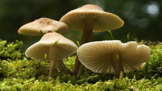 lugares para probar hongos alucinogenos 7