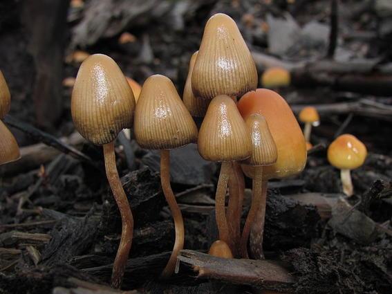 lugares para probar hongos alucinogenos 5