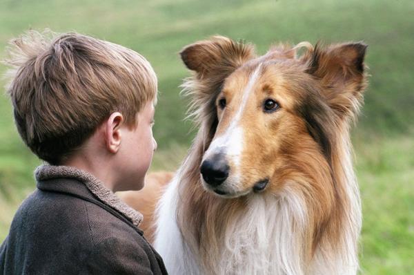 lassie-perros-cine-Cultura-Colectiva