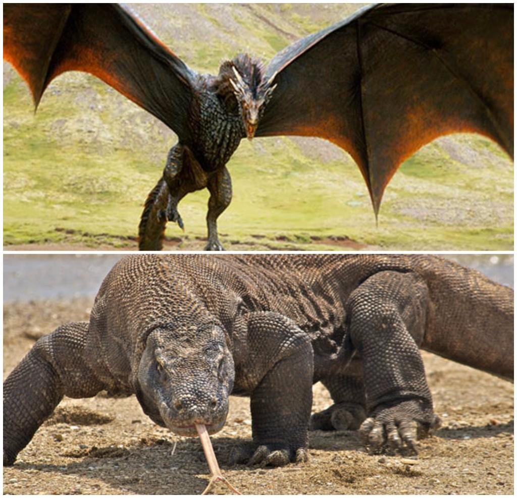 dragones mito realidad