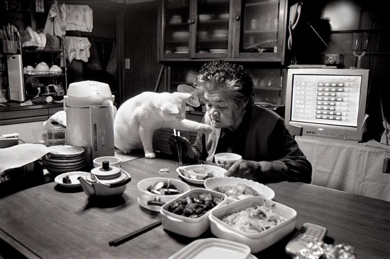 miyoko ihara amor de los gatos