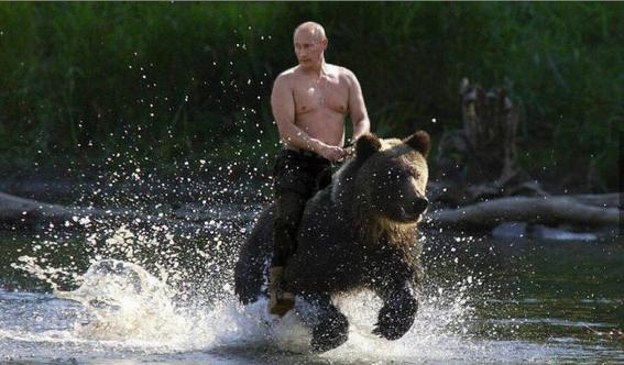 vladimir putin bear