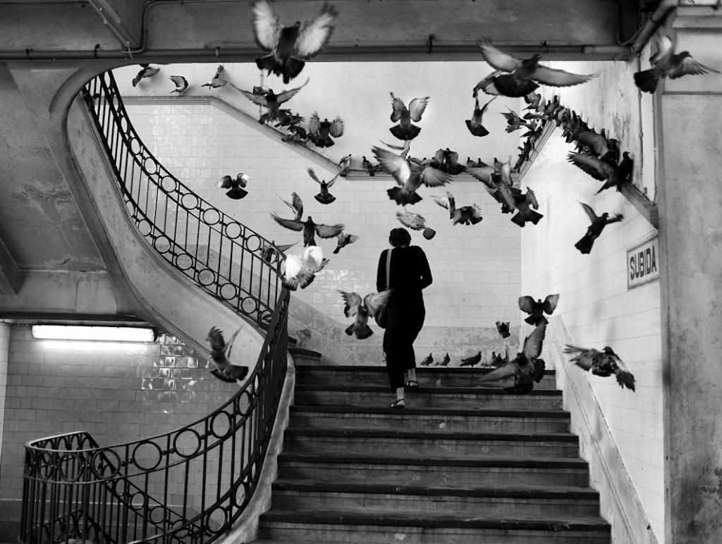 Cartier Bresson palomas
