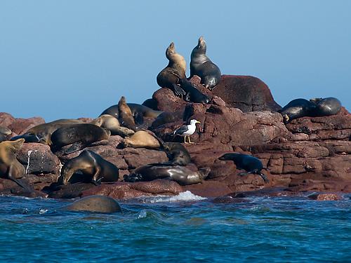 La Isla Espiritu Santo en Baja California