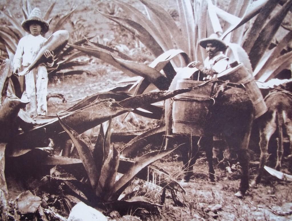 Mayahuel. Tlachiqueros