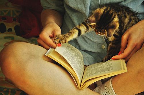 gato libro
