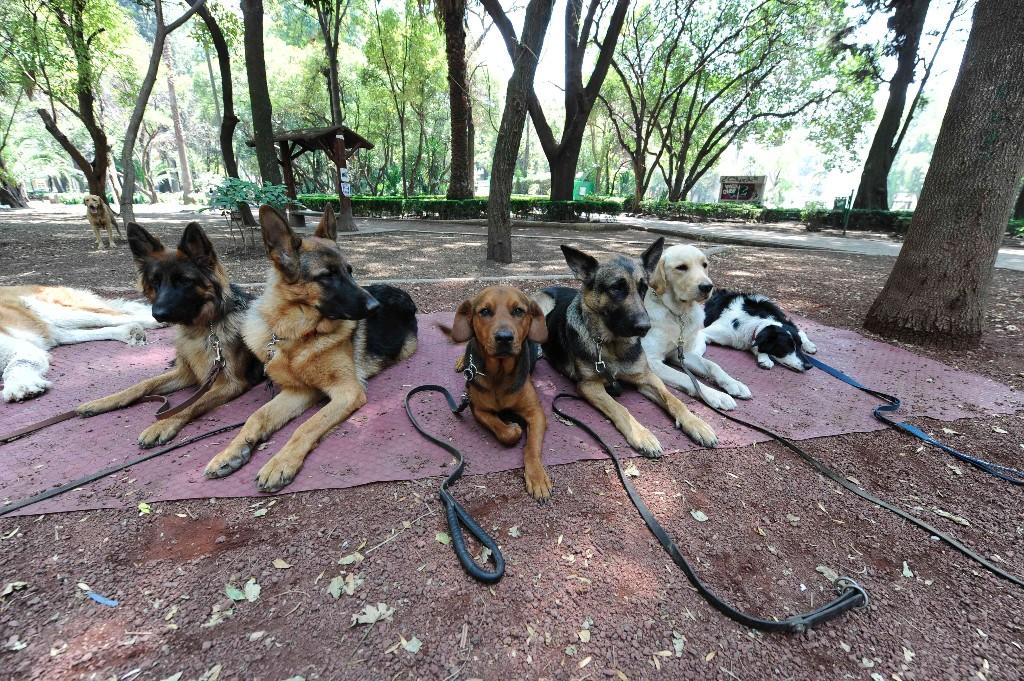 lugares pet friendly parque mexico