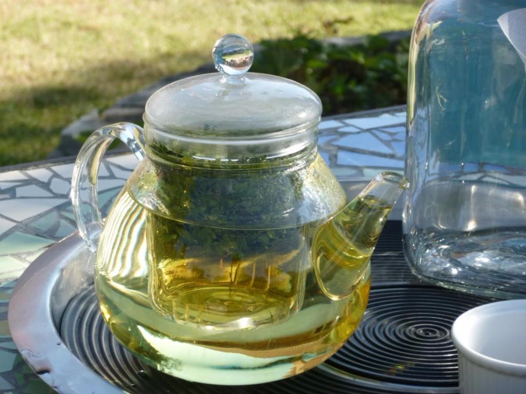 moringa té