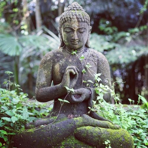 Frases de Buda-Buda