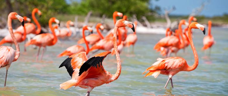 8 Increíbles Destinos En México Para Viajar Con Amigos: 8 Consejos Para Viajar A Las Playas Más Hermosas Y No Ser