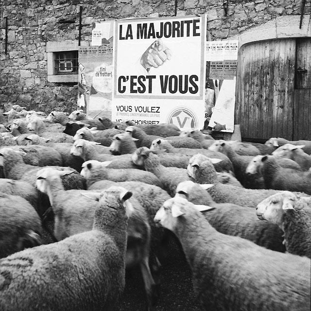fotografias de la vida ovejas
