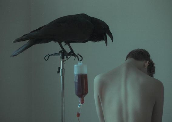 laura makebresku arruinar tu vida cuervo