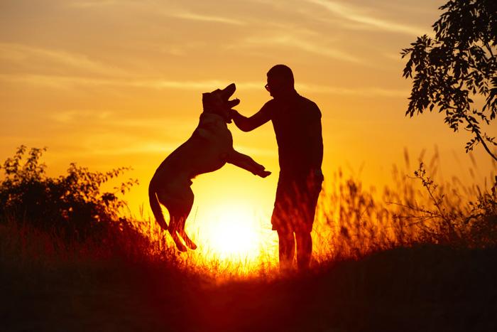 Frases Que Confirman Que El Perro Es El Mejor Amigo Del Hombre