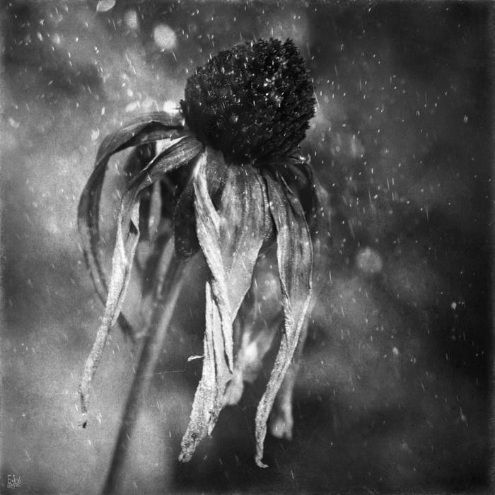 melancolía poemas de Rosario Castellanos