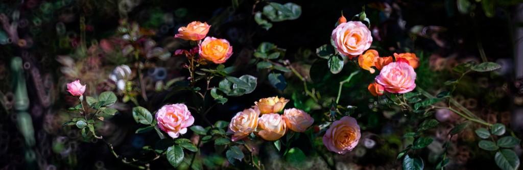 sor juana inés de la cruz - frases- rosas