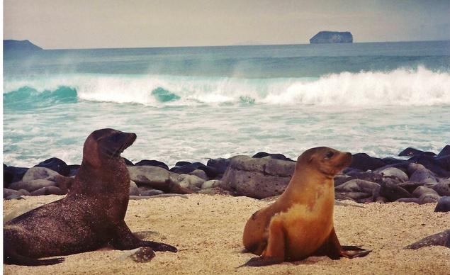 Galápagos leones marinos playa