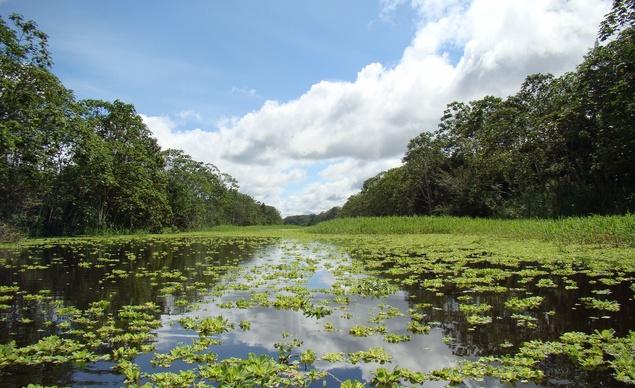 Río Amazonas Perú