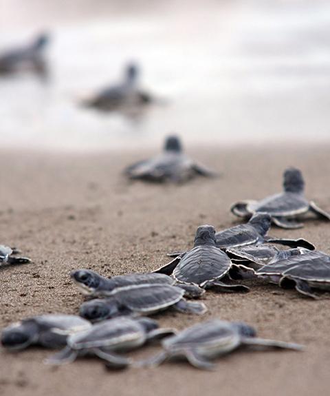 Playas extranas marquelia