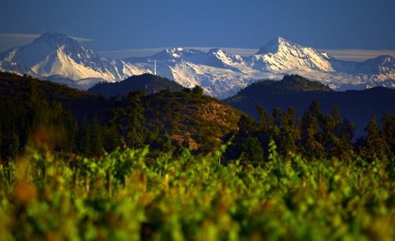 Chile viñedo