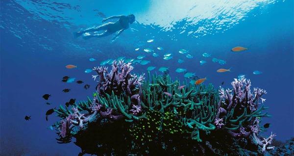 arrecifes de coral en peligro