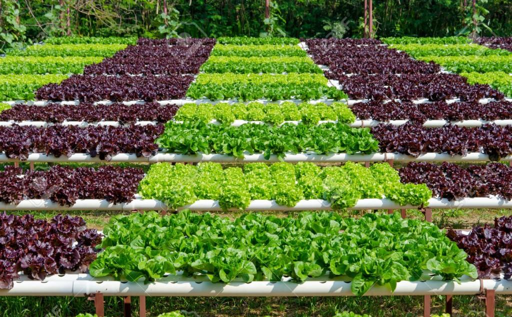 cursos-para-universitarios-agricultua