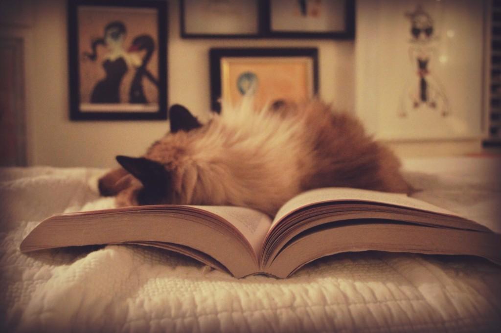 gato realismo magico