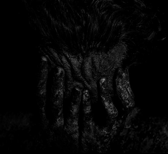 Grégory Gaydu - Noir Foncé