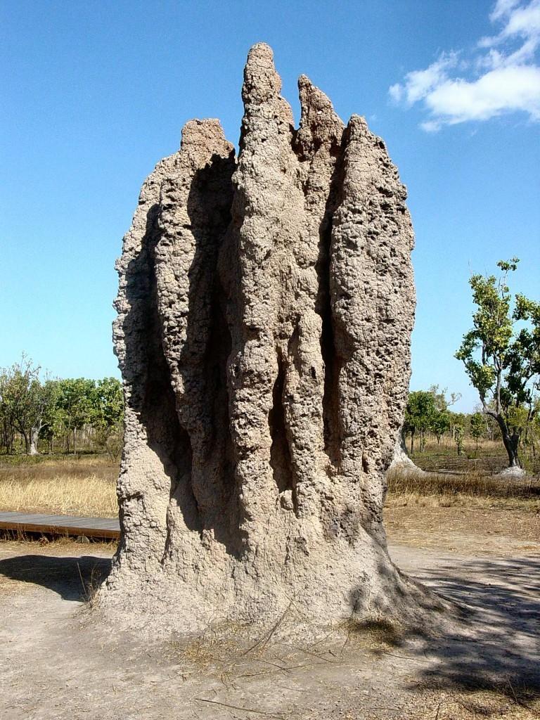 nido termitas