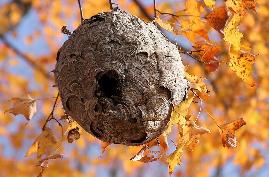 Fotografías de insectos