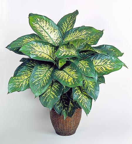 plantas que te podrian matar