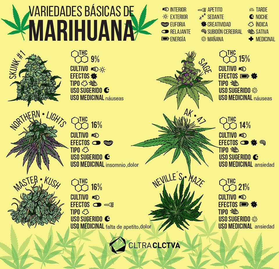 Mitos sobre la marihuana que no tienen nada de fundamento