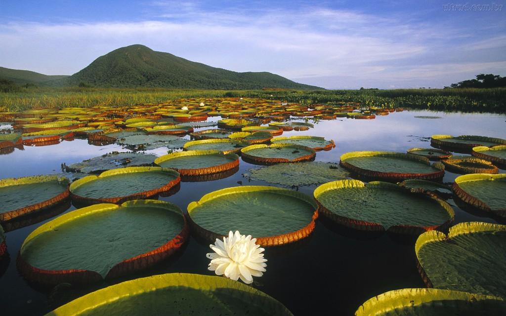 America Latina Calentamiento Global Amazonia