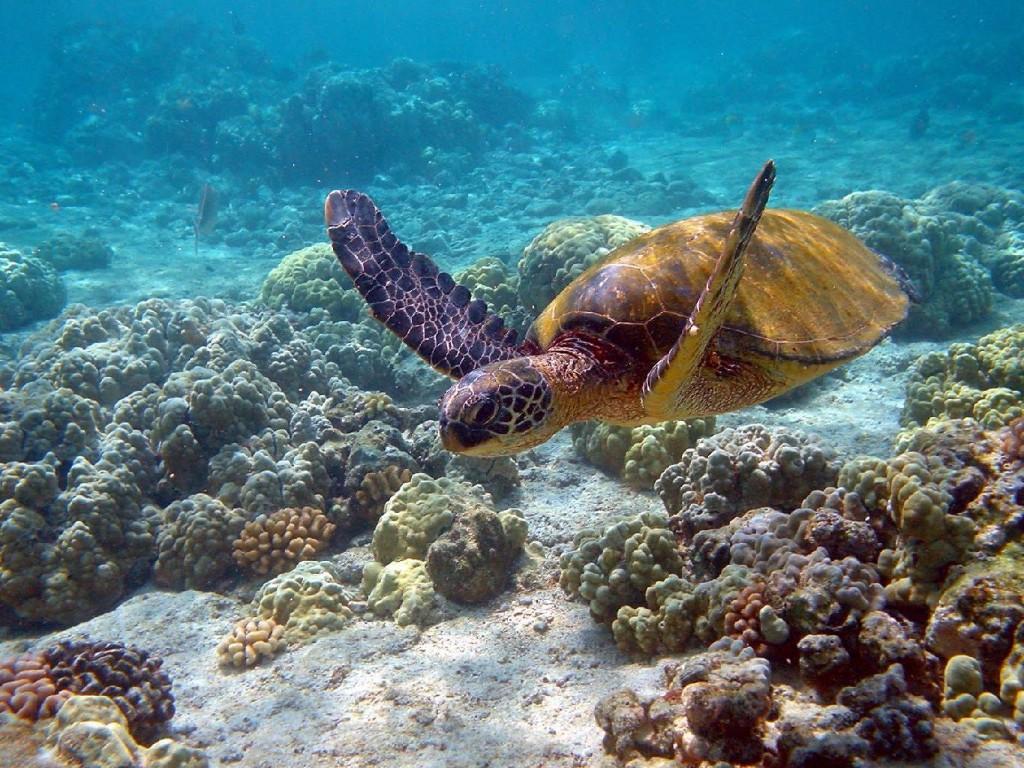 America Latina Calentamiento Global Galapagos
