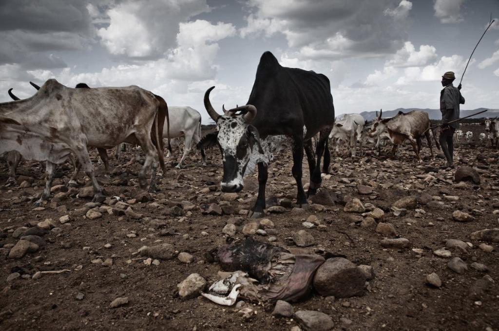 Cambio climatico no existe animales muertos sequias