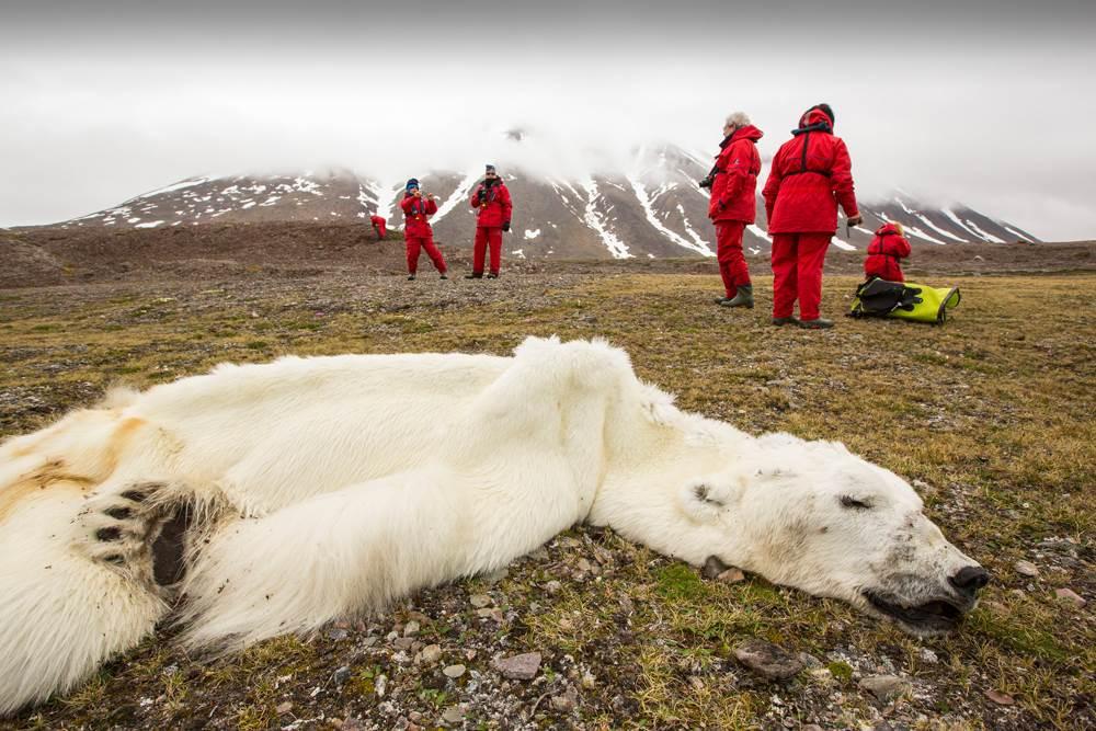 Cambio climatico no existe muerte oso polar