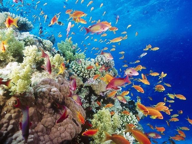 arrecife_002