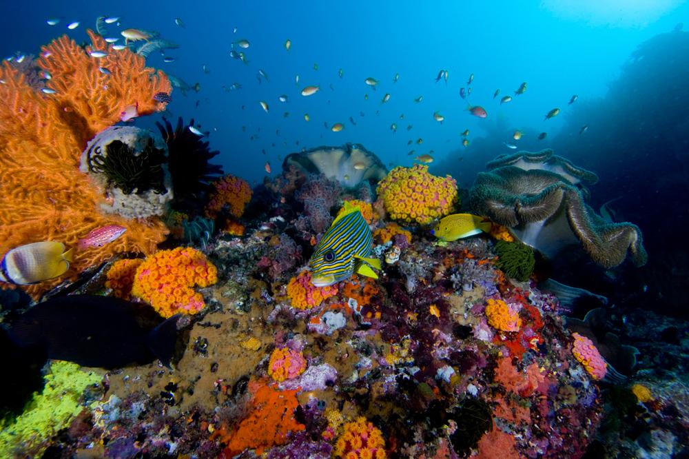 arrecife_003