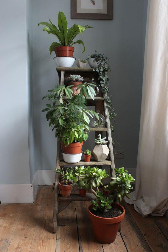 decorar tu departamento plantas