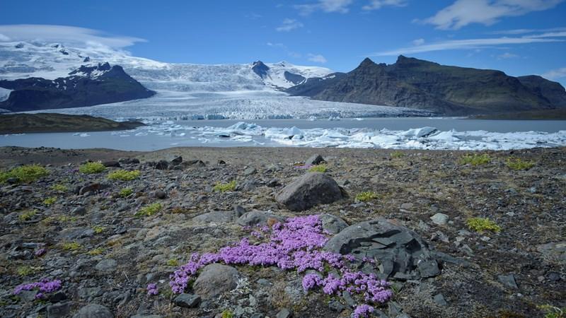 la rutina Islandia parque