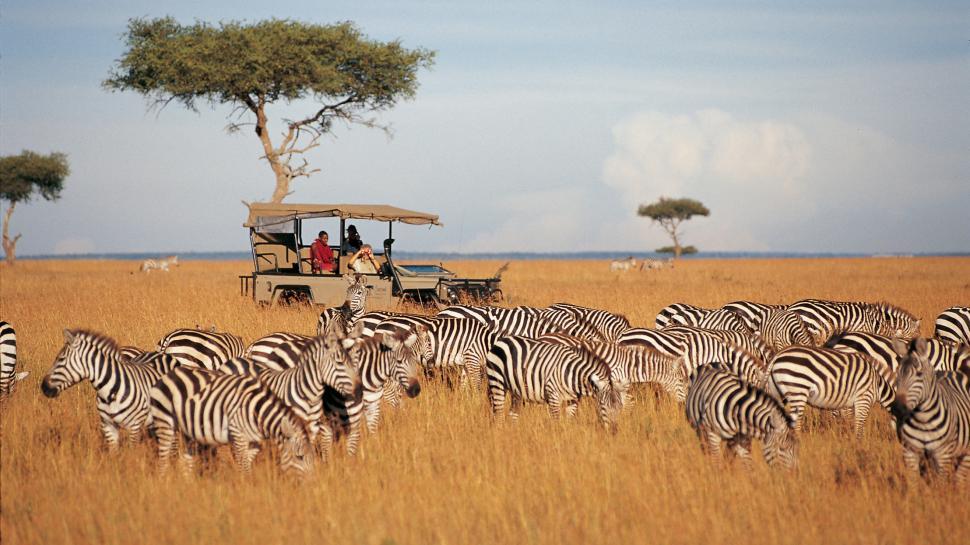 la rutina Serengueti